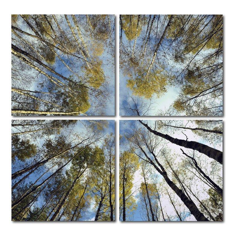Wandbild 4er Set Fotodruck Motiv Wald Kunstdruck Bild Auf